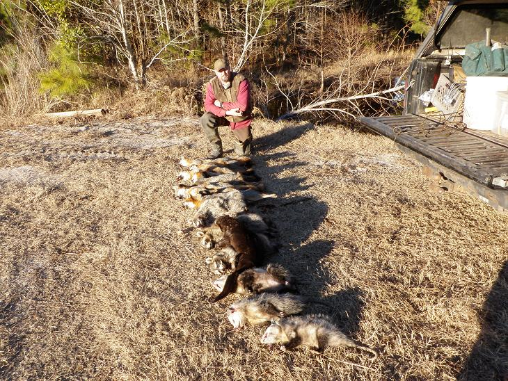 Trapping TV show 2,  coyote trapping with dirt hole trench set, beaver, otter and raccoon trapping