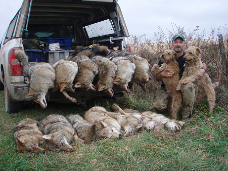 coyote trapping mark zagger