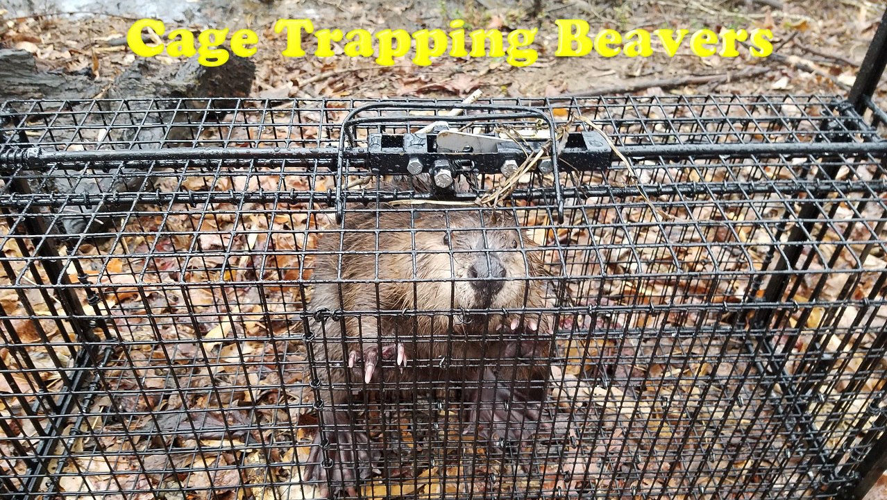 MeatTrapper Radio Episode 35 – Cage Trapping for Meat